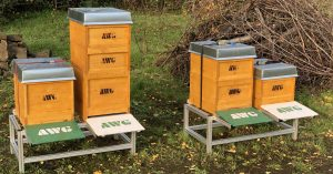 Królestwo dla pszczoły