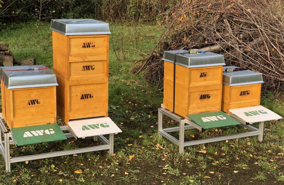 Un regno per le api